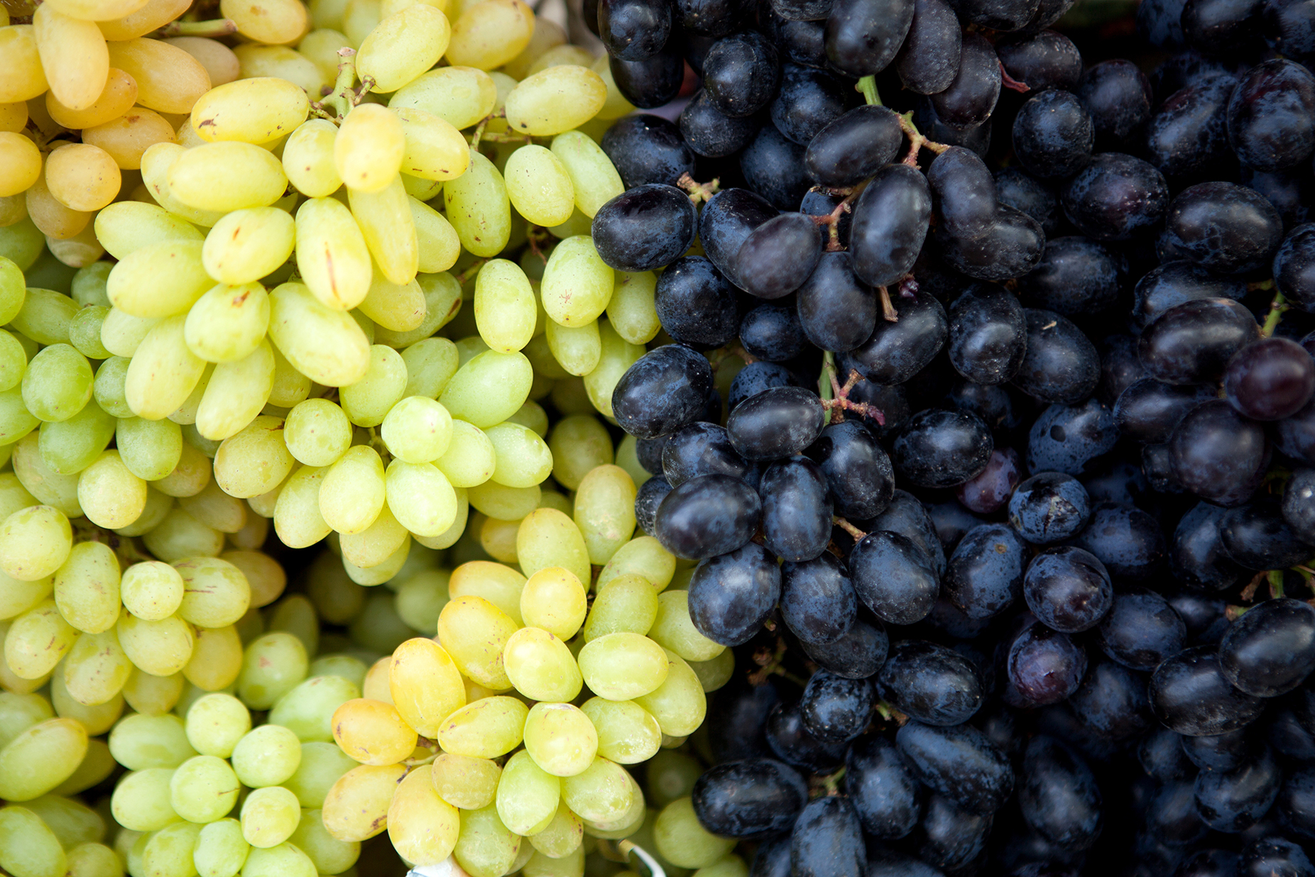 Blanc de Blancs vs Blanc de Noirs grapes
